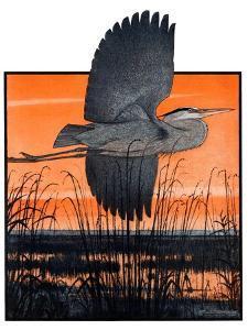 """""""Marsh Bird,""""October 3, 1925 by Paul Bransom"""