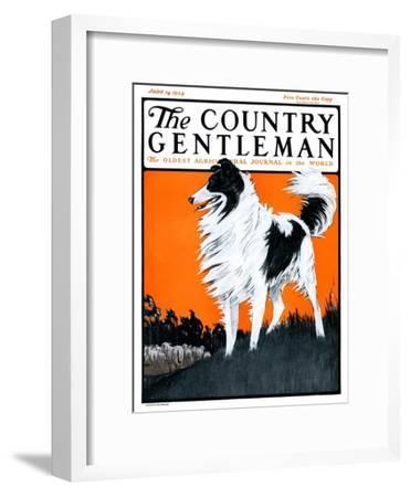 """Sheepdog Oversees Flock,"" Country Gentleman Cover, June 14, 1924"