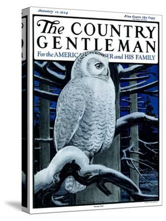 """""""Snowy Owl in Forest at Night,"""" Country Gentleman Cover, January 12, 1924"""