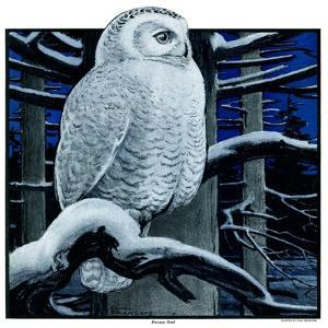 """Snowy Owl in Forest at Night,""January 12, 1924 by Paul Bransom"