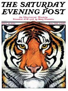 """Tiger Head,"" Saturday Evening Post Cover, September 18, 1926 by Paul Bransom"
