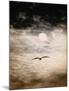 A Silhouetted Frigate Bird Takes Flight in a Stangely Lit Daytime Sky by Paul Chesley