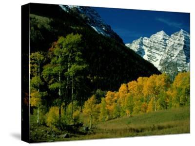 Autumn View of Aspen Trees against a Backdrop of Snow-Covered Mountains