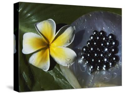 Black Pearls and Hibiscus Flower