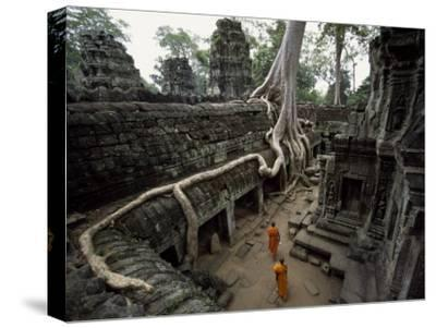 Buddhist Monks Near Large Strangler Fig at the Ta Phrom Temple