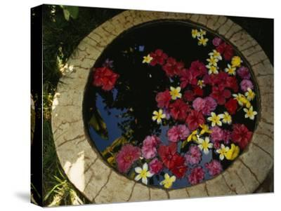 Plumeria and Hibiscus Flowers in a Small Pool