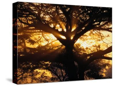 Sunlight Filters Through the Branches of a Large Tree