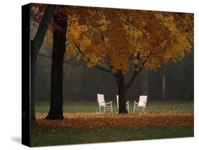 Three Welcoming Rocking Chairs under an Autumn-Hued Maple Tree