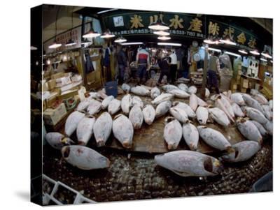 Tuna Caught in the Indian Ocean Await Buyers at Tsukiji Fish Market