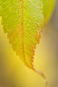 Morning Dew on Autumn Foliage by Paul Colangelo