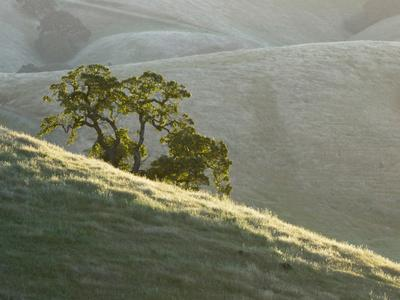 Mt. Diablo State Park, California, Usa