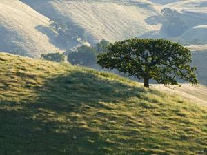 Mt. Diablo State Park, California, Usa by Paul Colangelo