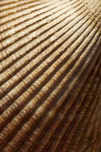 Patterns of a Seashell by Paul Colangelo