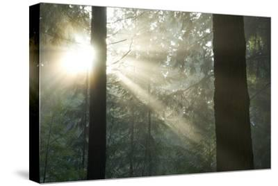 Sun Bursts in a Misty Pacific Temperate Rainforest