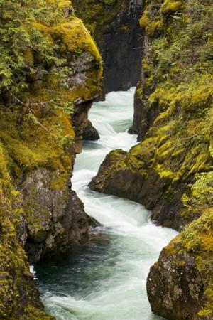 The Little Qualicum River Cuts a Gorge in Little Qualicum Falls Provincial Park by Paul Colangelo