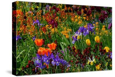 A Riot of Colorful Tulips, Irises and Other Flowers in Monet's Garden in Giverny