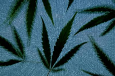 An Assortment of Marijuana Leaves Against a Blue Speckled Background