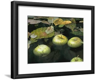Apples Floating in a Pond