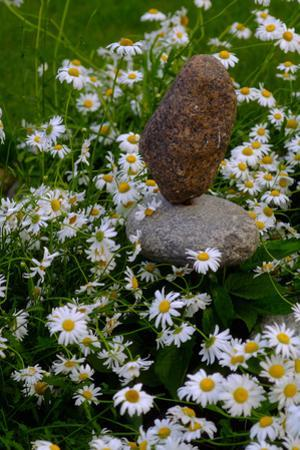 Daisies Blooming around Balancing Rocks in the Backyard of a Home