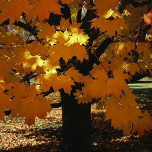 Leaf Color Change in Whitnall Park by Paul Damien