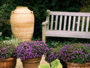 Potted Plants and a Garden Bench in the Chicago Botanic Garden by Paul Damien