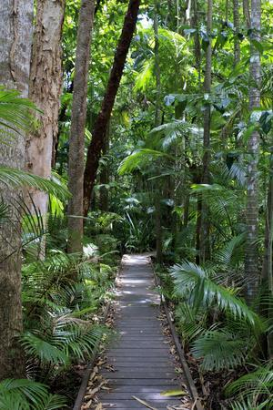 The Rainforest Boardwalk Connecting Centenary Lakes to the Botanic Gardens in Cairns, Queensland