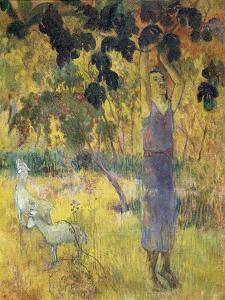 Man Picking Fruit from a Tree, 1897 by Paul Gauguin