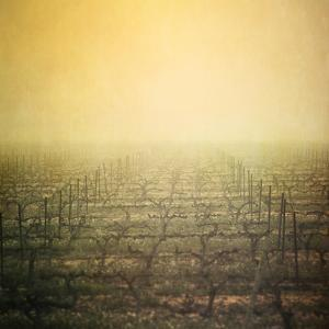 Vineyard in Mist by Paul Grand Image