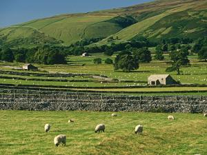 Field Walls of Littondale, Yorkshire Dales National Park, England by Paul Harris