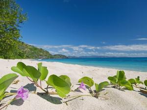 South Pacific, Fiji, Kadavu, Deserted Beach on the East Coast of Yaukuve Island by Paul Harris