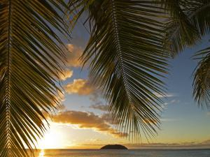 South Pacific, Fiji, Kadavu, Sunset Through Plams from the Beach on Dravuni Island by Paul Harris