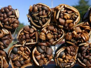 Bundles of Dried Kelp (Cochayuyo) for Sale at Seaside Stall by Paul Kennedy