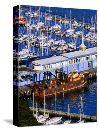Chaeffers Marina at Oriental Bay, Wellington, Wellington, New Zealand
