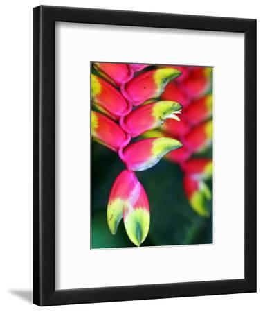 Colourful Shitulli Flower
