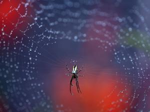 Spider in Centre of Web Covered in Rain Droplets by Paul Kennedy