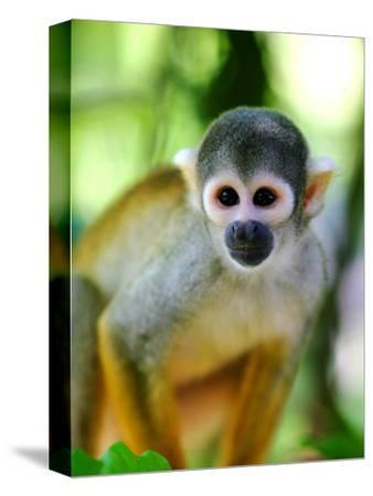 Squirrel Monkey at an Animal Rescue Centre