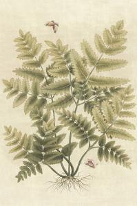 Ferns in Antique I by Paul Montgomery