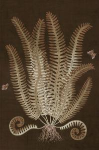 Ferns in Roasted Brown III by Paul Montgomery