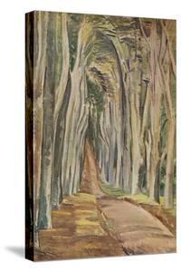 'Savernake Forest', 1935 by Paul Nash