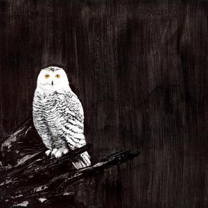 Owl by Paul Ngo