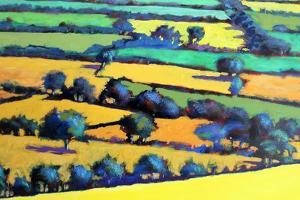 Whiteleaved oak close up 4 by Paul Powis
