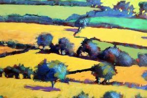 Whiteleaved oak close up 5 by Paul Powis