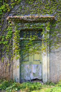 Vegetation and Ivy Growing over Empty Hall Near Leeds Yorkshire Uk by Paul Ridsdale