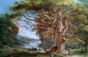 Ancient Beech Tree, 1794 by Paul Sandby