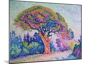 The Pine Tree at St. Tropez, 1909 by Paul Signac