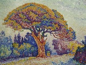 The Pine Tree at St, Tropez, 1909 by Paul Signac
