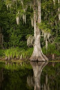 Bayou, New Orleans, Louisiana by Paul Souders