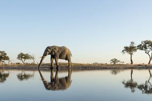 Botswana, Chobe NP, African Elephant at Water Hole in Savuti Marsh by Paul Souders