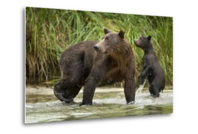 Brown Bear Mother and Cub, Katmai National Park, Alaska