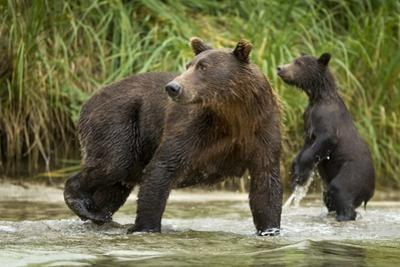 Brown Bear Mother and Cub, Katmai National Park, Alaska by Paul Souders